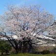 金沢城公園 石川門 内側